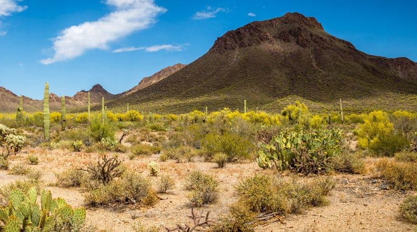 Jadestone-on-Olive_Phoenix-Arizona_02